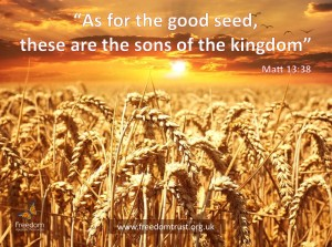 good-seed-en