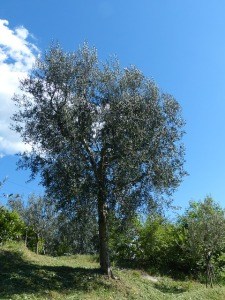 tree-357583_640
