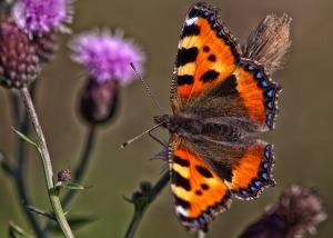 butterfly-970170_640