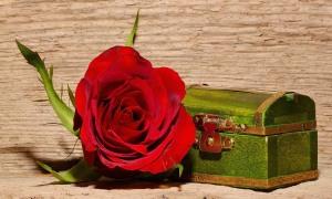 rose-557694_1280